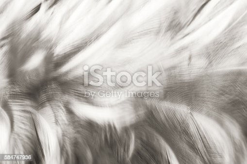 istock Black and white vintage color trends chicken feather texture background 584747936