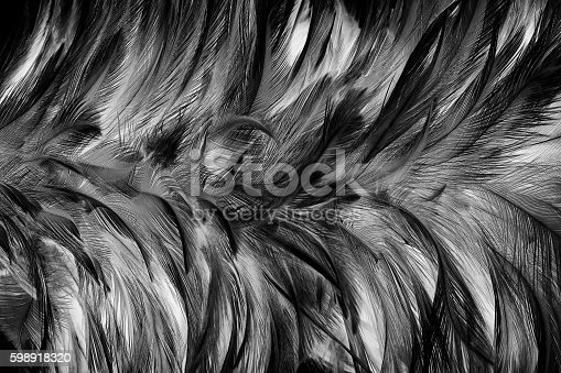 istock Black and white vintage color trends chicken feather texture background 598918320