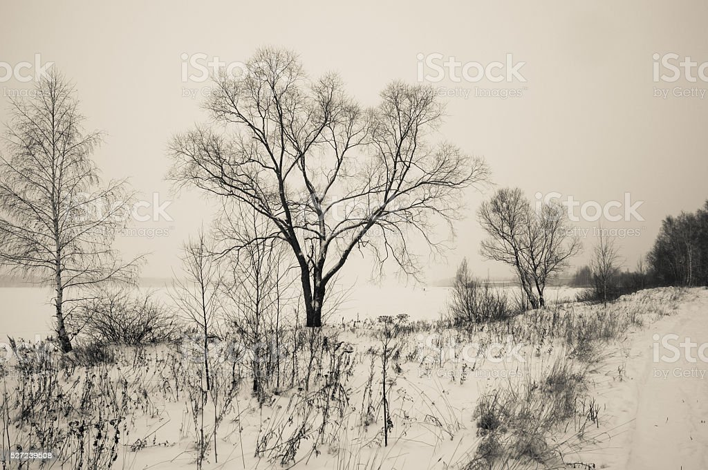 Black and white winter landscape stock photo