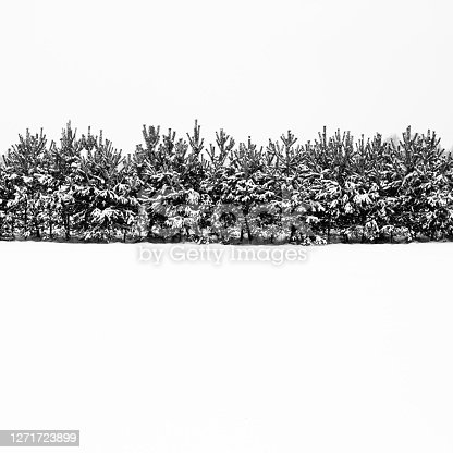 istock Black and white winter landscape, snowy winter trees 1271723899