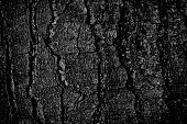 Monochromatic background obtained by shooting close up on wood bark surface and BW treatment with Photoshop.
