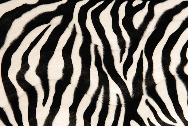 black and white zebra print background  - animal markings stock photos and pictures