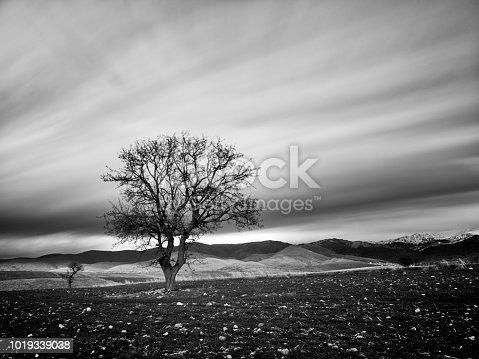 Antalya, Turkey - January 21, 2018: A single tree in Antalya, on a cold winter morning.