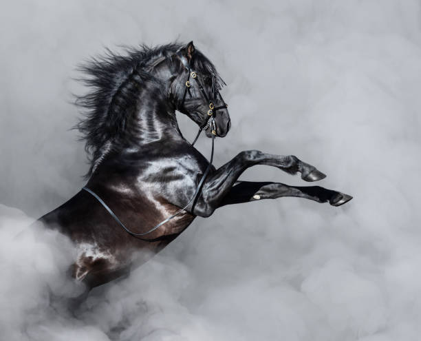 black andalusian horse rearing in smoke. - horse stock pictures, royalty-free photos & images