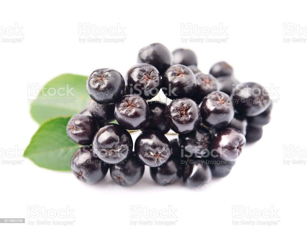 Black aronia berries. stock photo
