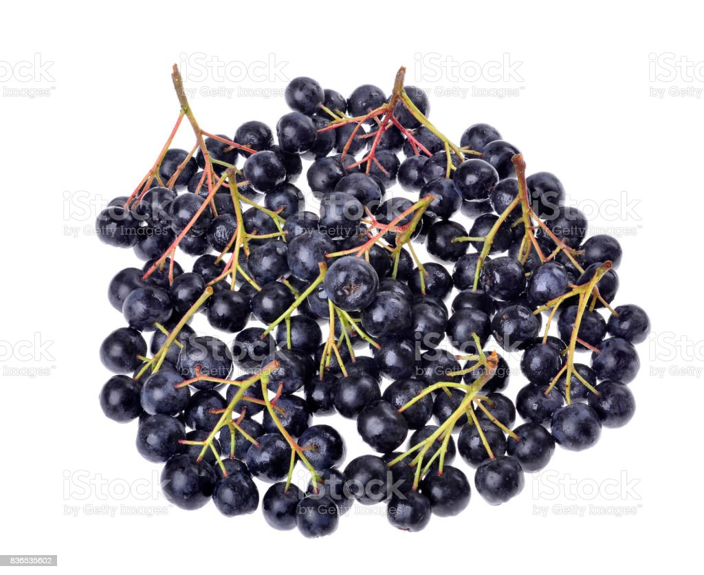 Black aronia ( chokeberry)  isolated stock photo