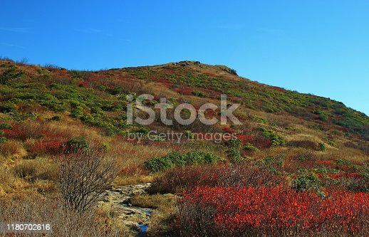 istock Black Balsam Knob in the Shining Rock Wilderness, North Carolina. 1180702616