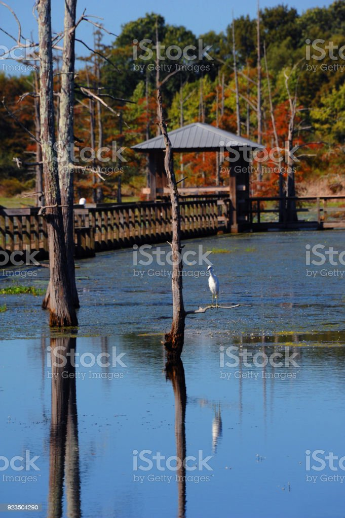 Black Bayou Lake and Snowy Egret stock photo