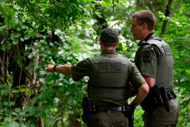 Black Bear Captured after Five-Day Chase in Southeastern Pennsyvlania stock photo