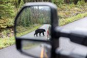 istock Black Bear Crossing the Road in Jasper National Park, Canada 1294350071