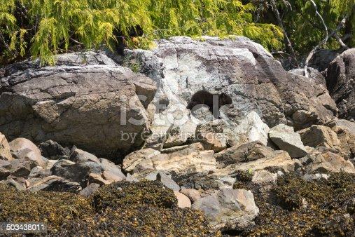 istock Black Bear Cub climbing rocks 503438011