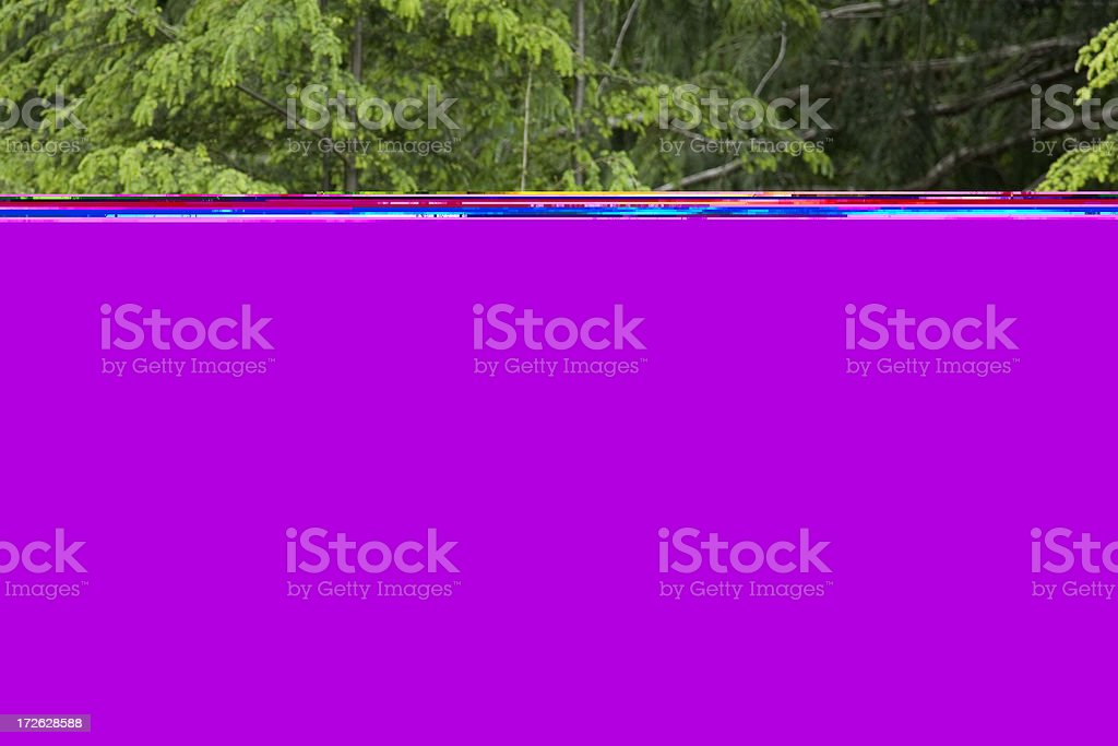 Black Bear on a Pile of  Waste Wood stock photo