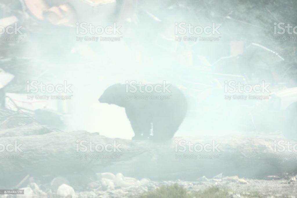 Black Bear Smoke Silhouette Ursus americanus stock photo