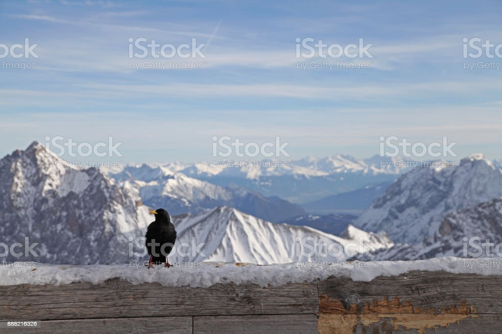 black bird zugspitze alps mountain snow ski in winter blue sky landscape garmisch germany stock photo