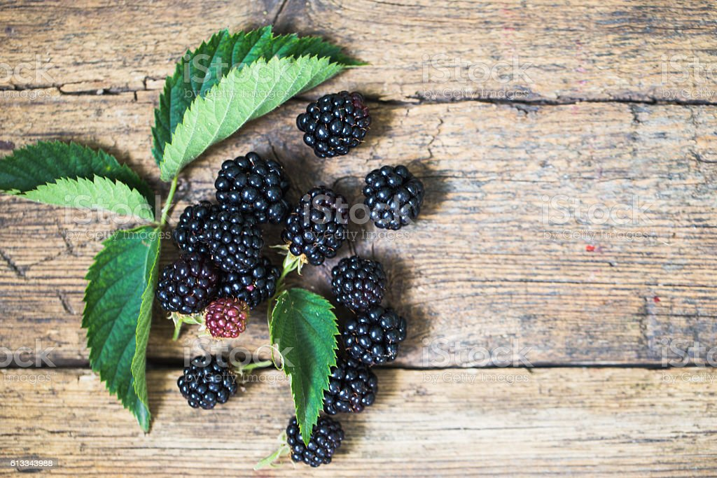 black blackberries, ripe blackberries, unripe blackberries on the bush stock photo