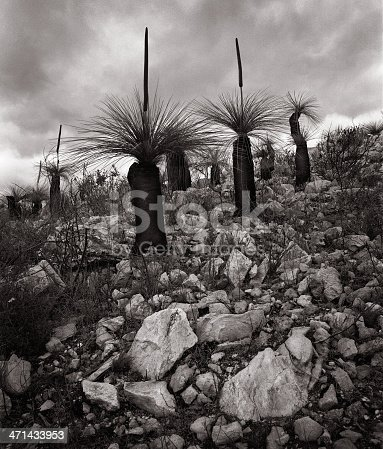 A black and white landscape of
