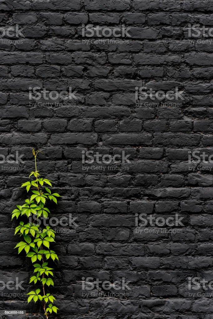 Black Brick wall royalty-free stock photo