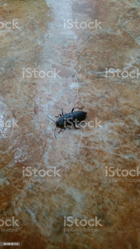 Black bug on the floor stock photo