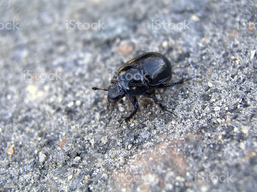 Black bug royalty-free stock photo
