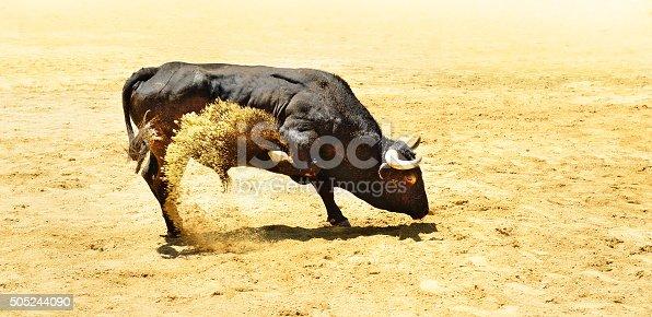 istock Black bull 505244090