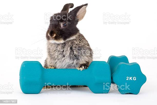 Black bunny and a weight picture id145917907?b=1&k=6&m=145917907&s=612x612&h=z lulhheiicv5djj dsjyv sfl0amuoogc1dn1xqp1s=