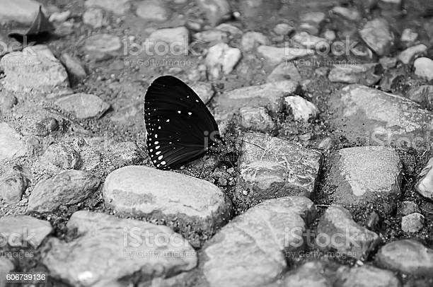 Black butterfly on ground for background picture id606739136?b=1&k=6&m=606739136&s=612x612&h=dtqphy zrlfg jsppjo9cbxfnqrpjd1dnfkce1z4ve0=