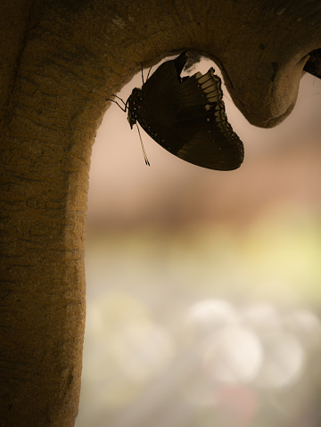 909806032 istock photo Black Butterfly Perched upside down 939173632