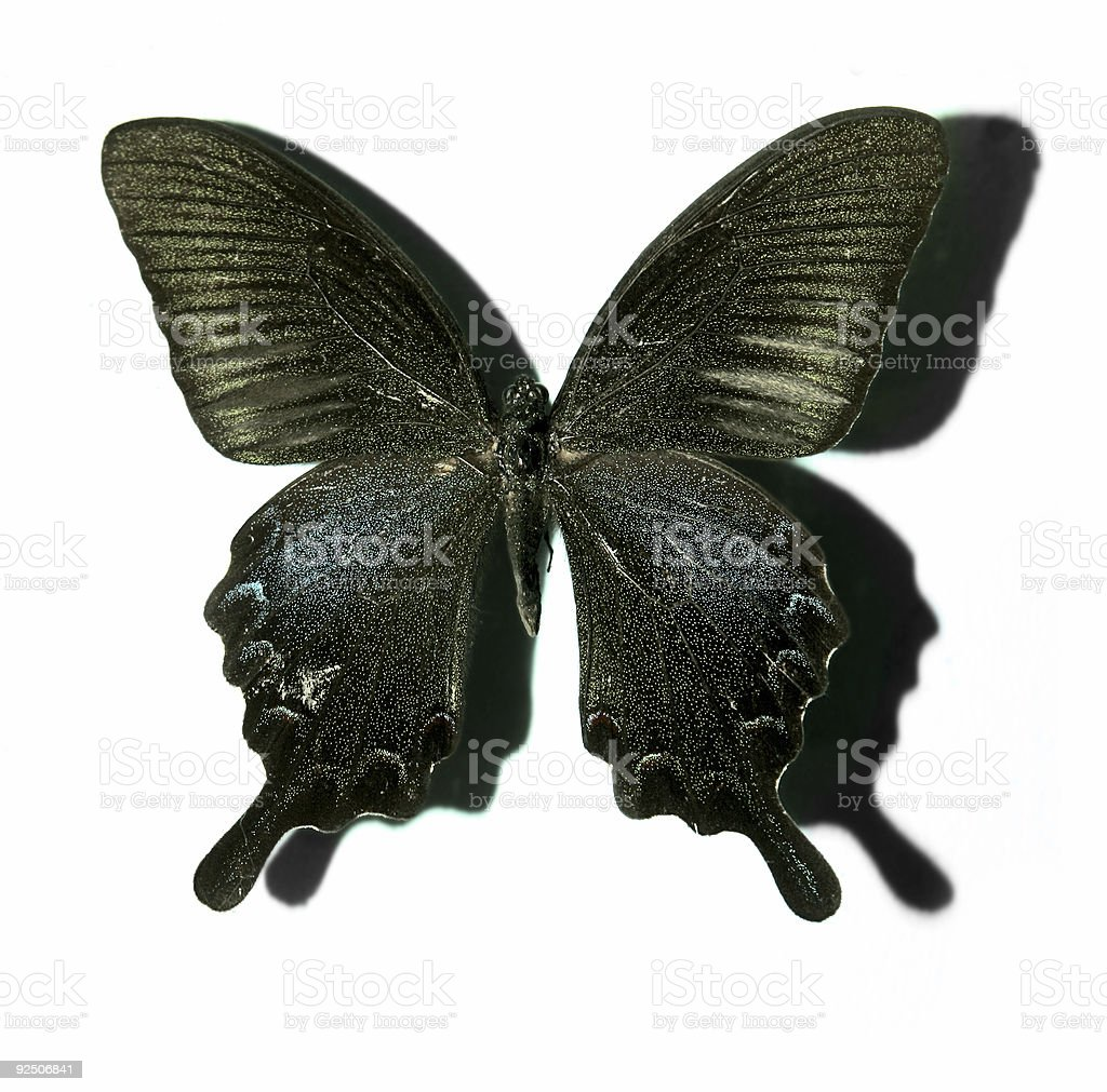 Black Butterfly. royalty-free stock photo