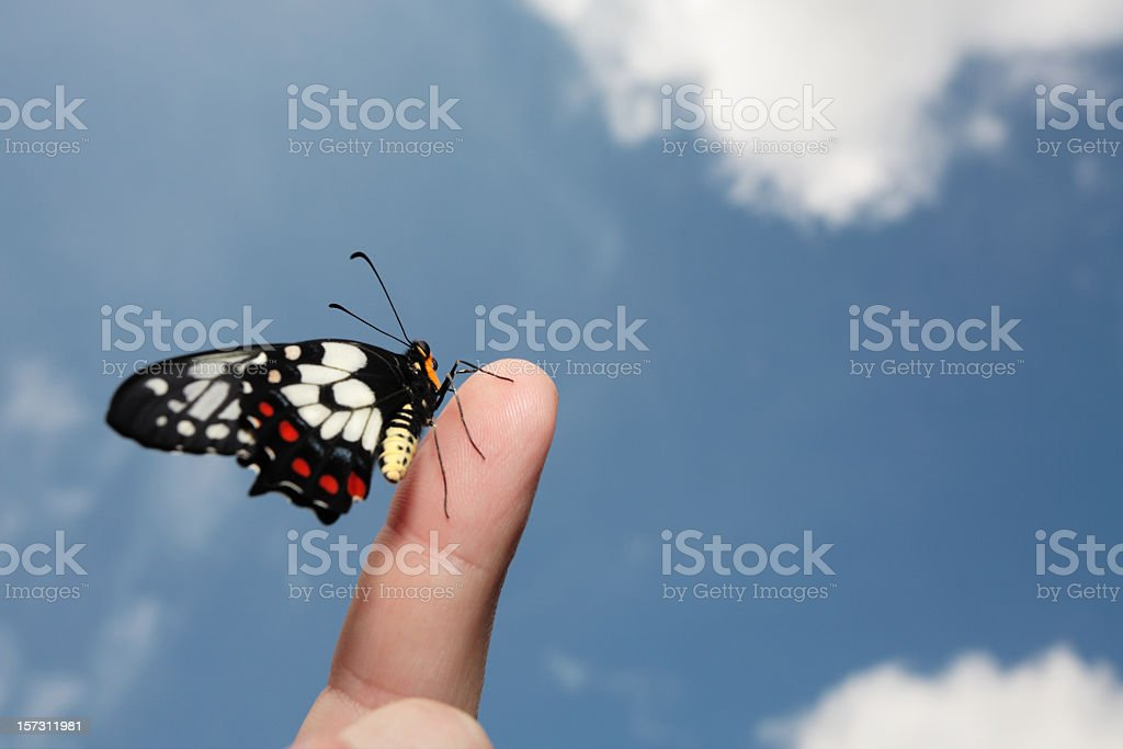 A black butterfly posing on an index finger stock photo
