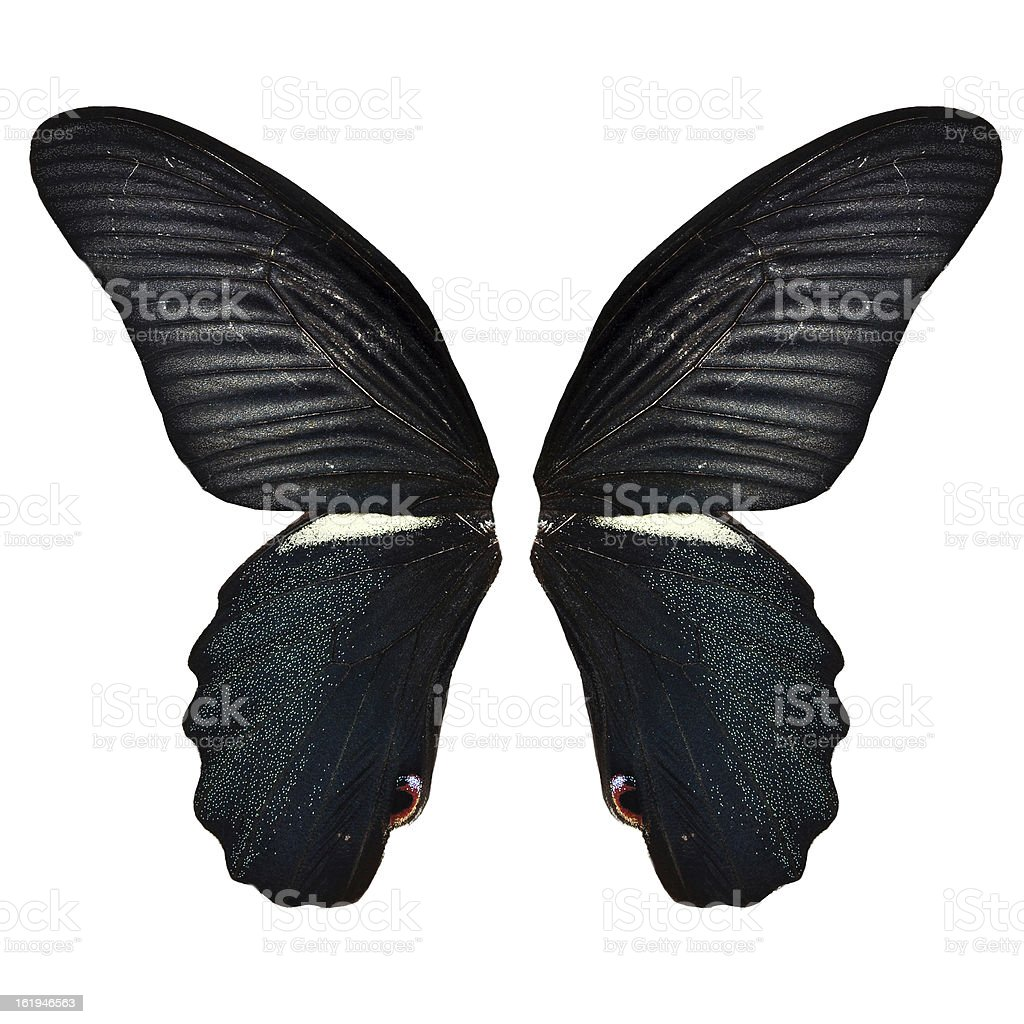 Black butterfly wing royalty-free stock photo