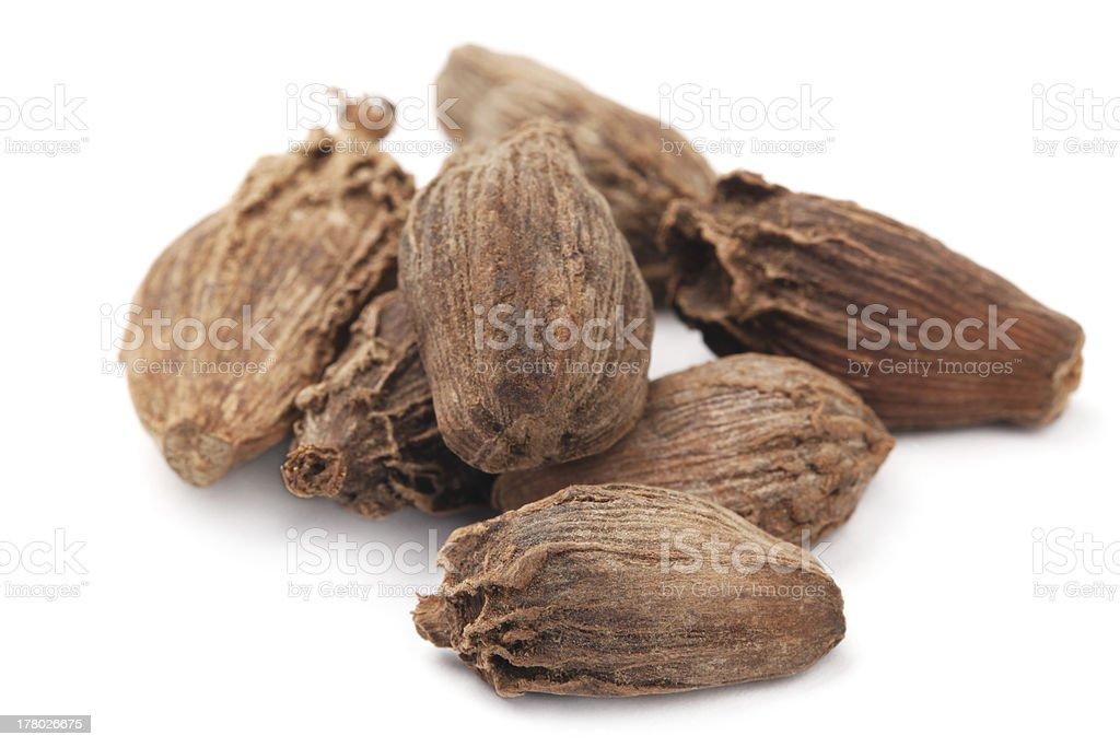 Black Cardamom isolated on white background stock photo