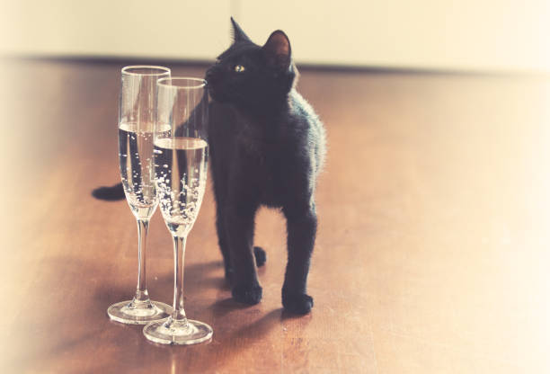 Black cat and champagne good luck concept picture id883182044?b=1&k=6&m=883182044&s=612x612&w=0&h=wjnpbqvj3j3jup5m5r9yukogo6smzrfmcf3kzt69hlm=