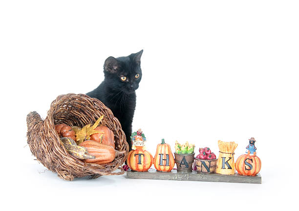 Black cat and corucopia Black cat sitting next to cornucopia and thanksgiving sign. thanksgiving pets stock pictures, royalty-free photos & images
