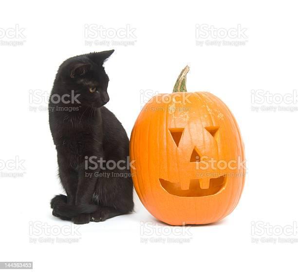Black cat and pumpkin picture id144363453?b=1&k=6&m=144363453&s=612x612&h=qjtnxfhrqk6b0z60g1rqgkjteulirguvhodn5t3uzv4=