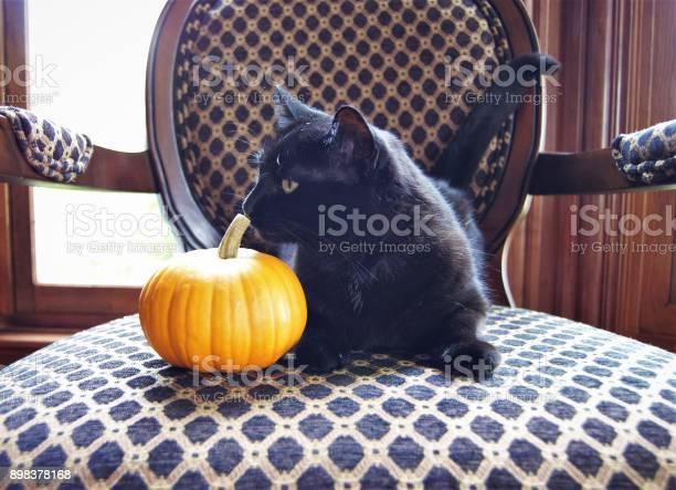 Black cat and pumpkin picture id898378168?b=1&k=6&m=898378168&s=612x612&h=dr6i7foc0urczp3usivzmkkren7yitdprkfjqstpxyo=