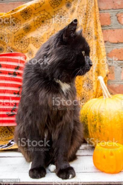 Black cat and pumpkins for halloween picture id863840118?b=1&k=6&m=863840118&s=612x612&h=bkvblwcglnlt ybmn4nbo9vstv sonimr42dzz8bxwy=