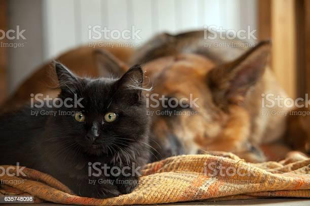 Black cat and sleeping dog picture id635748098?b=1&k=6&m=635748098&s=612x612&h=ac4dhwrzdmxuqawlonytzaukzlwj1up2nykopb bchu=