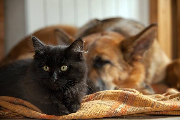 Black cat and sleeping dog. – zdjęcie