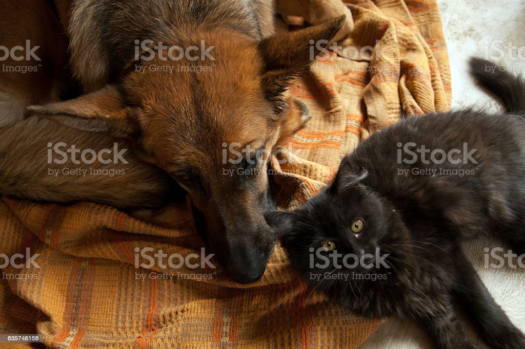 Black cat and sleeping dog. – zdjęcie