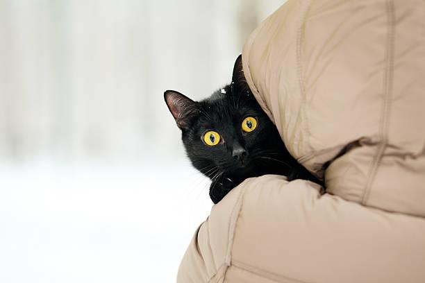 schwarze katze und frau - suche katze stock-fotos und bilder
