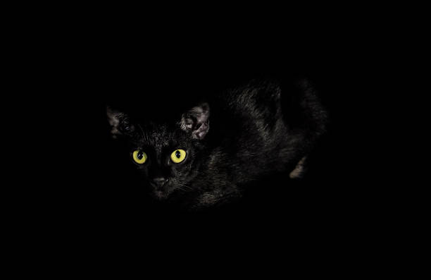 Black cat are gazing in the dark picture id824808914?b=1&k=6&m=824808914&s=612x612&w=0&h=wvt3nfgbxe1nk0u1mclnmmifdfz4rs63izqgxjeqzbg=