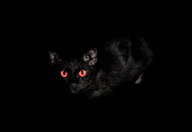Black cat are gazing in the dark picture id824808942?b=1&k=6&m=824808942&s=612x612&w=0&h=zu2q5fcbf9bmbhzpoea7b90i3mk9te9qo67pavnnnmq=