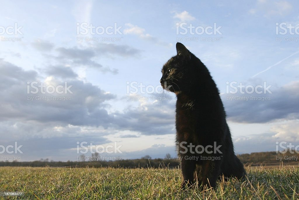 Black cat at sunset stock photo
