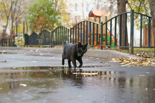 Black cat at the city street