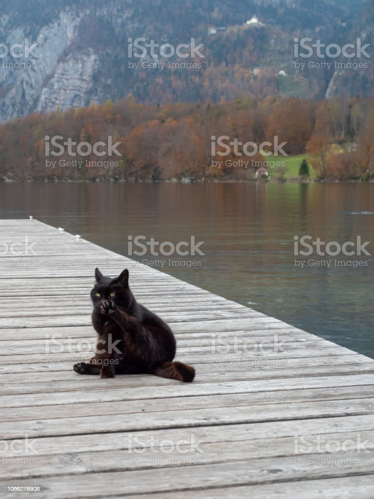 Black cat at the shore stock photo