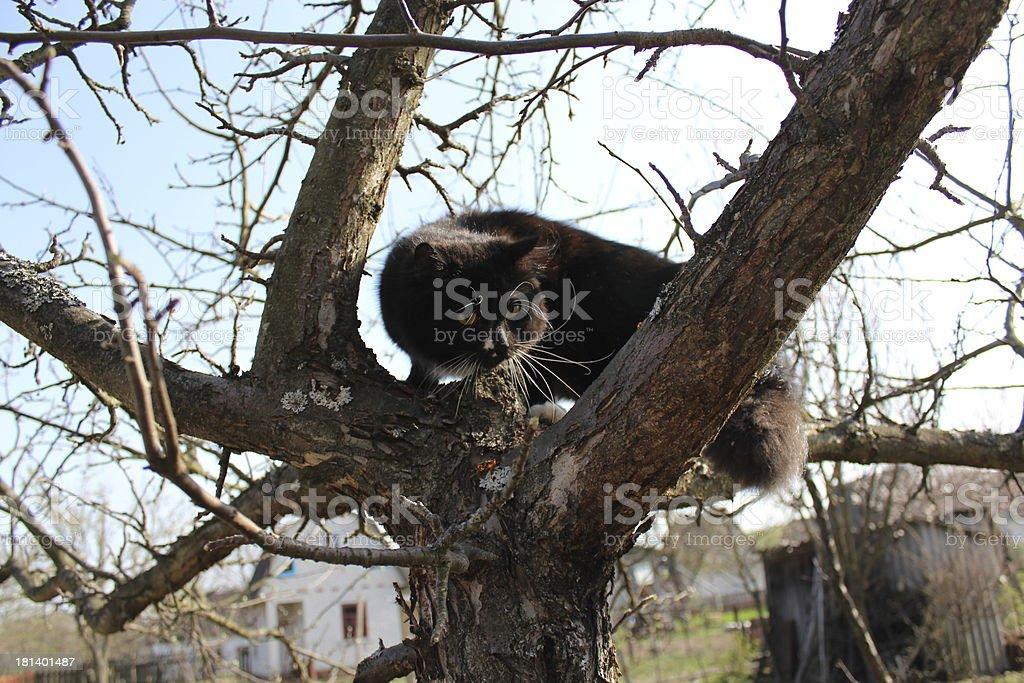 black cat climbing up the tree royalty-free stock photo