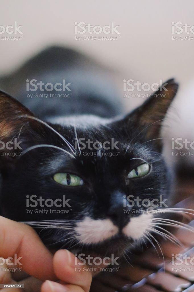 Black Cat close up -Stock Image stock photo