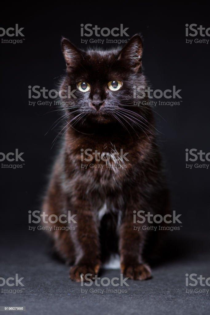 Black cat close-up on a black background stock photo