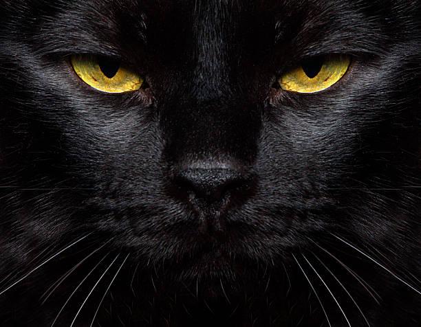 Black cat closeup picture id482120733?b=1&k=6&m=482120733&s=612x612&w=0&h=kgw kvujzb1kmvk itw6dge6n57gmg4dzfjig marsu=