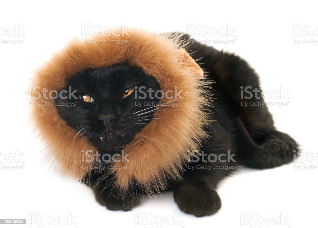black cat disguised stock photo